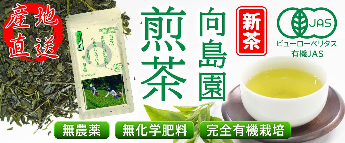向島園の煎茶/新茶